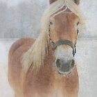 Winter Horse  by JUSTART