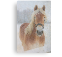 Winter Horse  - JUSTART © Canvas Print