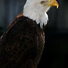 Majestic Freedom IV by Sheryl Unwin