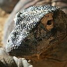Komodo Dragon II at Lowry Park Zoo by Sheryl Unwin