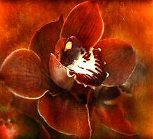Orchid Series #3 by linaji