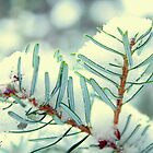 Winter pine by aMOONy