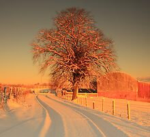 The lone tree. by Fred Taylor