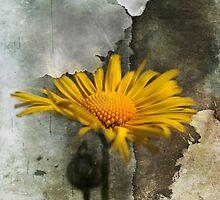 YellowFlower by RosiLorz