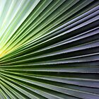 Palm Leaf by Christopher Herrfurth
