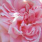 Pink Petals by Caren