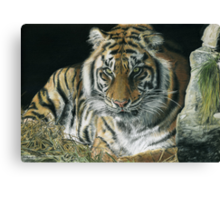 Year of the tiger by Sam Norbury & Rodeorose Canvas Print