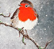 Winter Robin by Adam Regester
