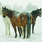 Three horses in the Montana snow by Donna Ridgway