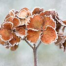 A touch of frost by Mandy Disher