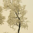 The Power of Touch, Montana trees in winter by Donna Ridgway