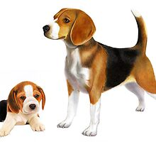 Beagle by Karen  Hull
