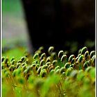 Moss by dazaria