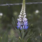 Roadside Flower by DZINE
