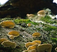 Fungal Family by Brian Edworthy