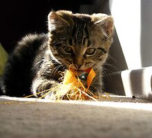 i promise i didn't eat the orange fluffs...... by Elizabeth Rose Rawlings