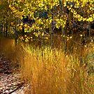 """""""Autumn Hues"""" by Lynn Bawden"""