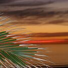 palms in the sunset by redrob2000