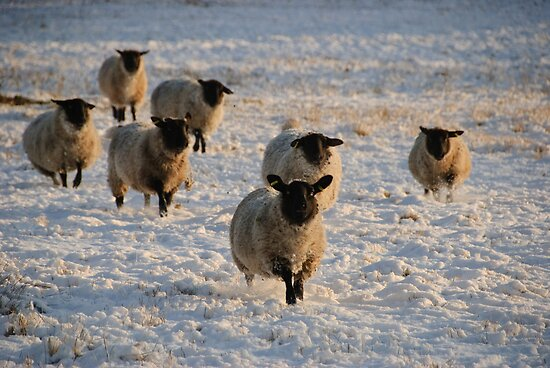 Running for their Christmas dinner by Christopher Cullen