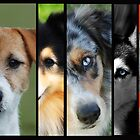 The Many Faces of Man's Best Friend by Emma Hardcastle