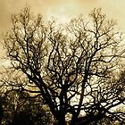 Tree silhouette by Alien Banana