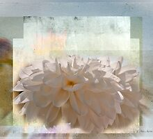 Floral Abstract by Carolann23