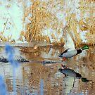 Winter mallards by Alan Mattison