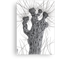 Pollard Willow Tree - Pen Drawing Canvas Print