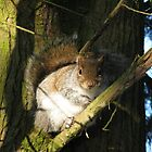 A Squirrel in the Branches by PhotogeniquE IPA