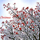 Berry Merry Christmas by Lisa Williams