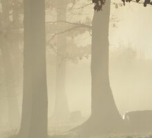 Silent Woods by NatureGreeting Cards ©ccwri