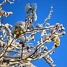 Snow & Blue by Paul Finnegan