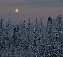 Late Noon Moon - Alaska  by Melissa Seaback