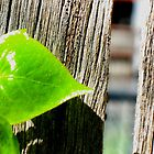 Green on wood. by Eija