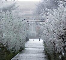 Winter Wonderland by Stephen Willmer