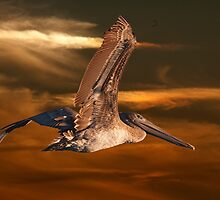 Brown Pelican Fly By by imagetj