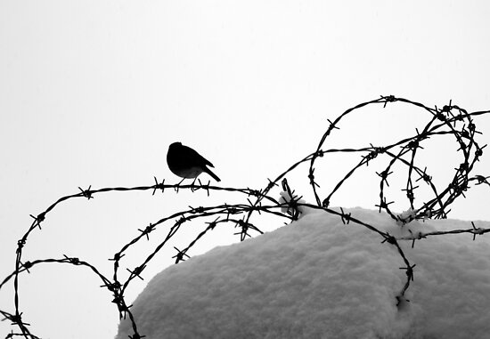 Bird on barbed wire by Esther  Moliné