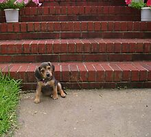 Precious puppy! by susiqfc