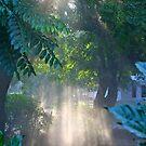 Morning Dust! by Gursimran Sibia