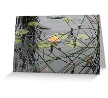 Water reeds making strong lines in the water. Greeting Card