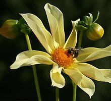 To Bee or Not To Bee by Monnie Ryan