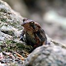 Appalachian Toad by David Lee Thompson