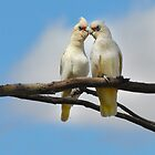 Ain&#x27;t love grand - Two Little Corellas by Ian Berry