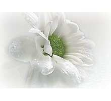 ~ White Beauty ~ Photographic Print