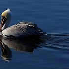 brown pelican by kathy s gillentine