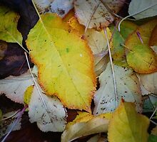 Change of Season by Michelle  Wrighton