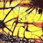 stress fracture by Lynne Prestebak