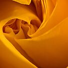 Inside a Yellow Rose by onyonet photo studios
