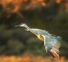 Golden flight by bettywiley