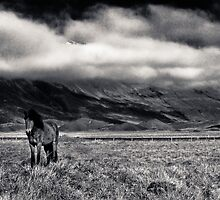 Pony - Iceland by TonySkerl Photography.com